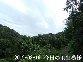 2019-08・16 今日の里山模様・・・ (5).JPG