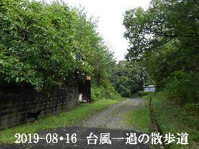 2019-08・16 台風一過の散歩道 (2).JPG