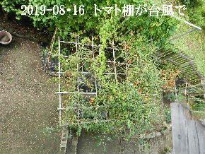 2019-08・16 我が家のスナップ・・・ (1).JPG