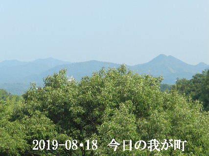 2019-08・18 今日の我が町.JPG