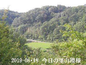 2019-08・18 今日の里山模様・・・ (4).JPG