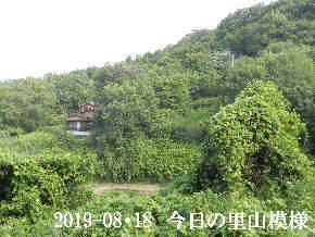 2019-08・18 今日の里山模様・・・ (5).JPG