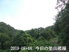 2019-08・18 今日の里山模様・・・ (6).JPG