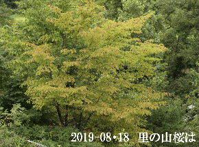 2019-08・18 里山の樹木は・・・ (1).JPG