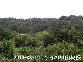 2019-08・19 今日の里山模様・・・ (3).JPG