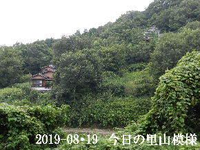2019-08・19 今日の里山模様・・・ (5).JPG