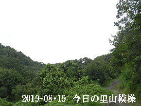 2019-08・19 今日の里山模様・・・ (6).JPG