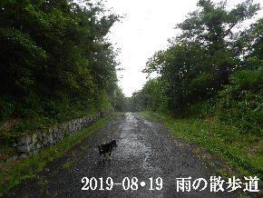 2019-08・19 雨の散歩道・・・ (1).JPG