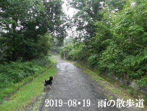 2019-08・19 雨の散歩道・・・ (3).JPG