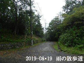 2019-08・19 雨の散歩道・・・ (4).JPG