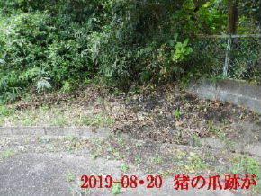 2019-08・20 今日の出遭い・・・ (1).JPG