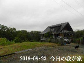 2019-08・20 今日の里山模様・・・ (1).JPG