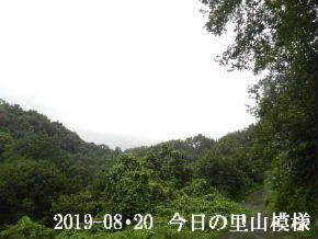 2019-08・20 今日の里山模様・・・ (5).JPG