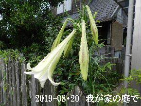 2019-08・20 我が家のスナップ・・・ (2).JPG