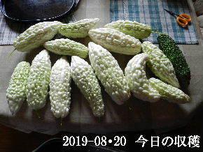 2019-08・20 我が家のスナップ・・・ (3).JPG