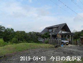 2019-08・21 今日の里山模様・・・ (1).JPG