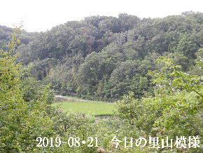 2019-08・21 今日の里山模様・・・ (4).JPG