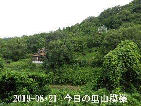 2019-08・21 今日の里山模様・・・ (5).JPG