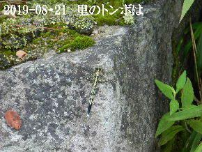 2019-08・21 里の昆虫達・・・ (1).JPG