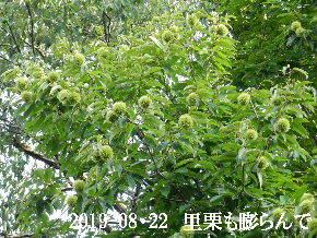 2019-08・22 今日の出遭い・・・ (1).JPG