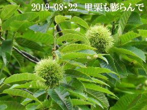 2019-08・22 今日の出遭い・・・ (2).JPG