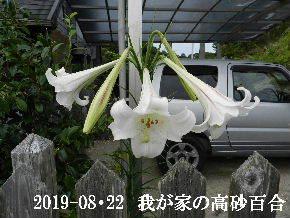 2019-08・22 今日の出遭い・・・ (3).JPG