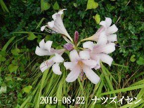 2019-08・22 今日の出遭い・・・ (4).JPG