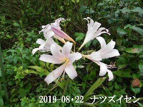 2019-08・22 今日の出遭い・・・ (6).JPG