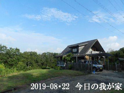 2019-08・22 今日の里山模様・・・ (1).JPG