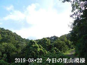 2019-08・22 今日の里山模様・・・ (5).JPG