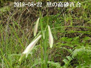 2019-08・22 我が家のスナップ・・・ (1).JPG