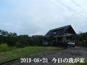 2019-08・23 今日の里山模様・・・ (1).JPG