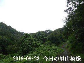 2019-08・23 今日の里山模様・・・ (6).JPG
