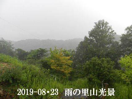 2019-08・23 今日の里山模様・・・ (7).JPG