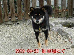 2019-08・23 今日の麻呂 (4).JPG