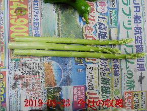2019-08・23 我が家のスナップ・・・ (2).JPG