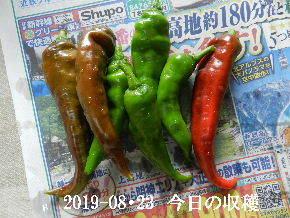 2019-08・23 我が家のスナップ・・・ (3).JPG