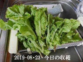 2019-08・23 我が家のスナップ・・・ (4).JPG