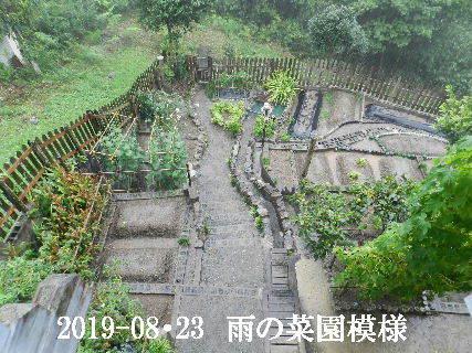 2019-08・23 我が家のスナップ・・・ (5).JPG