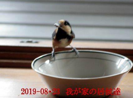 2019-08・23 我が家の居候達.JPG
