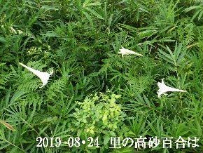 2019-08・24 今日の出遭い・・・ (1).JPG