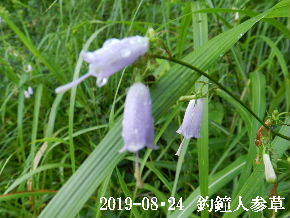 2019-08・24 今日の出遭い・・・ (2).JPG