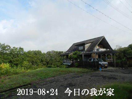 2019-08・24 今日の里山模様・・・ (1).JPG