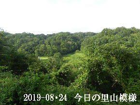 2019-08・24 今日の里山模様・・・ (2).JPG