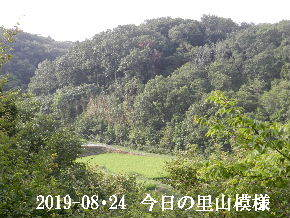 2019-08・24 今日の里山模様・・・ (3).JPG