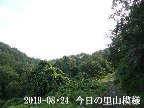 2019-08・24 今日の里山模様・・・ (5).JPG