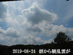 2019-08・24 今日の里山模様・・・ (6).JPG