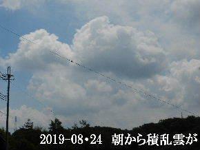 2019-08・24 今日の里山模様・・・ (7).JPG