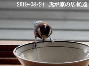2019-08・24 我が家の居候達・・・ (1).JPG