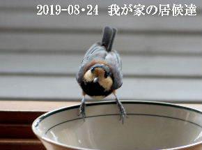 2019-08・24 我が家の居候達・・・ (2).JPG